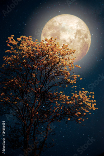 Wall mural Beautiful tree yellow flower blossom with milky way star in night skies full moon - Retro fantasy style artwork with vintage color tone.