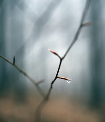 Raindrop on a twig in the forest
