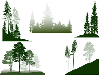 set of green pine and fir trees in fog