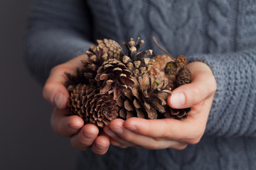 Woman hands holding a pile of spruce cones. Cozy winter or autumn shot.