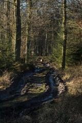 Tiefe Fahrspuren im Wald