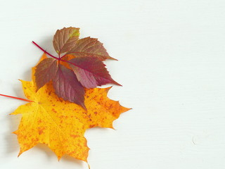 Red and yellow autumn leaves upon white wooden background. Copy space for your text.