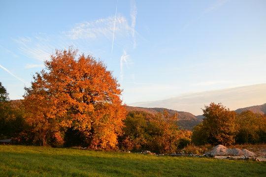 Bugey automne