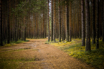 Forest track. Russia