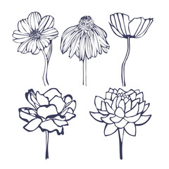 decorative flower icon collection, hand-drawing vector illustration sketch