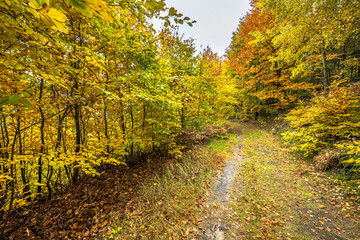 Path in the forest, autumn landscape with colorful trees, nature trail in Poland