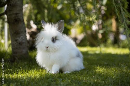 angora kaninchen im garten zdj stockowych i obraz w royalty free w obraz 124731024. Black Bedroom Furniture Sets. Home Design Ideas