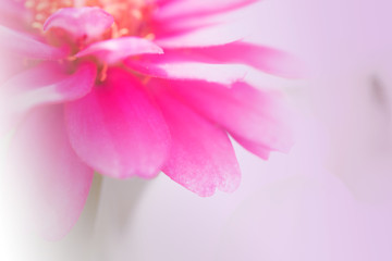 Soft and blur abstract pink flower background