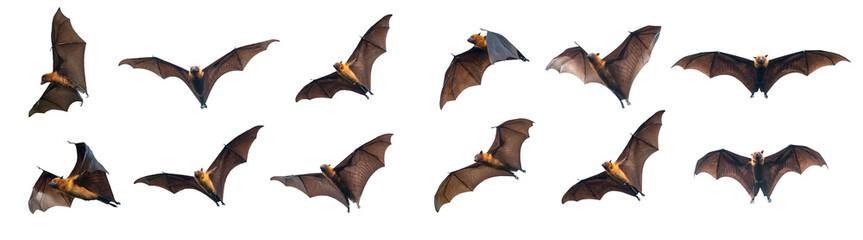 Bats flying on white background Fototapete