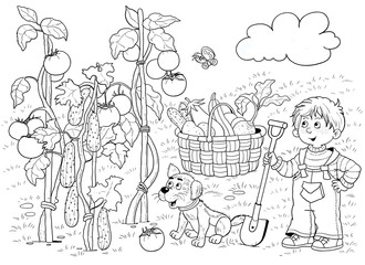 In the garden. A cute boy and vegetables. Tomatoes, cucumbers, eggplant, zucchini. Illustration for children. Coloring book. Coloring page. Funny cartoon characters.