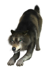 3D Rendering Wolf on White