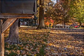 Autumn Leaves Scene