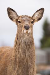 young deer outdoors in winter