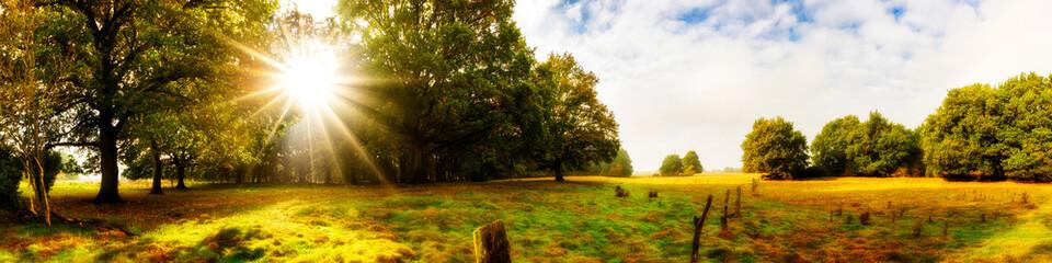Landschaft im Herbst, Panorama mit Wald und Wiese bei Sonnenaufgang