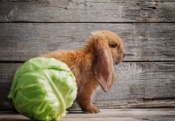 funny rabbit with vegetables on wooden background