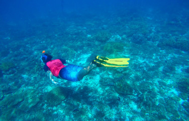 Snorkeling with sea turtle. Ocean landscape with coral reef, seaweed, nautical fauna.
