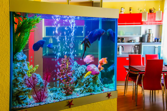 Beautiful aquarium with colorful fish in a room to modern apartment