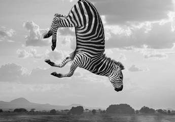 Composito zebre hakuna matata