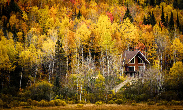 Small cottage surrounded by colors