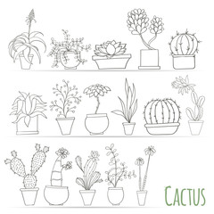 Set of cactus in pots Isolated on white background