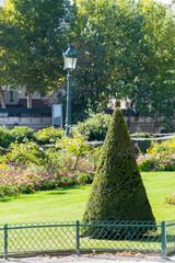 Evergreen pruned cone European box tree bushes