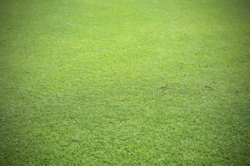 Green lawn for background texture