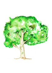 Tree, Watercolor painting on white background