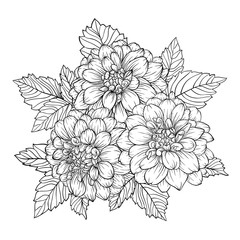 beautiful monochrome black and white bouquet dahlia isolated on background.
