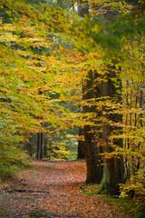 Hidden Forest Path