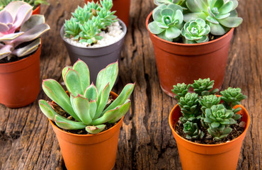 arrangement of succulents or cactus on wooden background