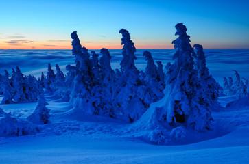 Sonnenaufgang über den Wolken, tief verschneite Winterlandschaft auf dem Gipfel des Brockens im Harz, schneegebeugte Bergfichten