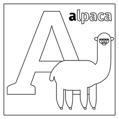 Coloring page or card for kids with English animals zoo alphabet. Alpaca, letter A vector illustration