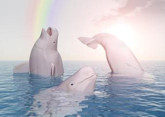 Beluga Wale