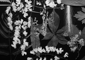Composition of pressed field flowers on black background shot black and white