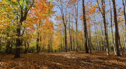 Canadian Autumn in Ontario