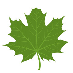 Print vector illustration of a green maple leaf