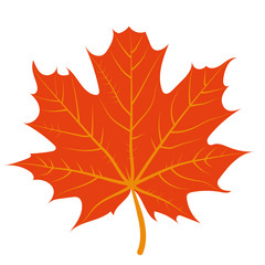 vector illustration of a red maple leaf