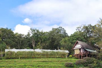Village landscape - old wooden house under the tree