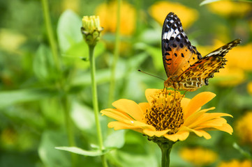 The butterfly and closeup with green background.