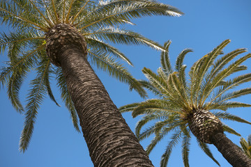 Couple of palms