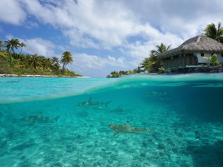 Half over and underwater sea, tropical island with a vacations resort and blacktip reef sharks below water surface, Tikehau atoll, Pacific ocean, French Polynesia