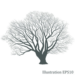 Tree silhouette, Vector eps10