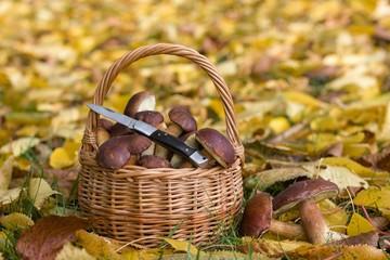 Wicker basket full of wild mushrooms lying in fallen autumn leaves. Autumn color tones.