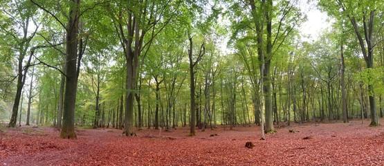 Vue panoramique dans la forêt de Saint-Amand-les-Eaux dans les Hauts-de-France