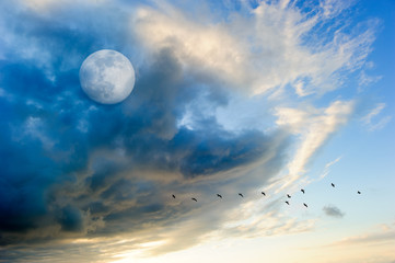 Birds Moon Clouds