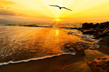 Wall Mural - Bird Silhouette Flying Ocean Sunset Sun Rays