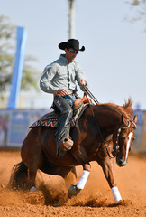 The side view of a rider in cowboy chaps, boots and hat on a horseback running ahead and stopping the horse in the dust.