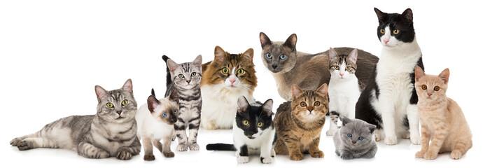 Obraz Verschiedene Katzen - fototapety do salonu