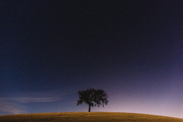 Oak Tree and Stars