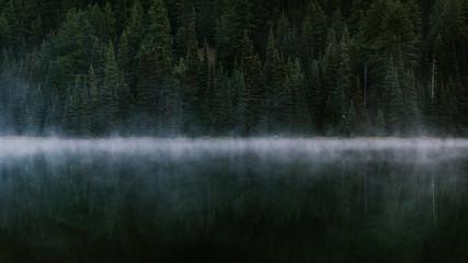 Foggy Lake Trees Fototapete